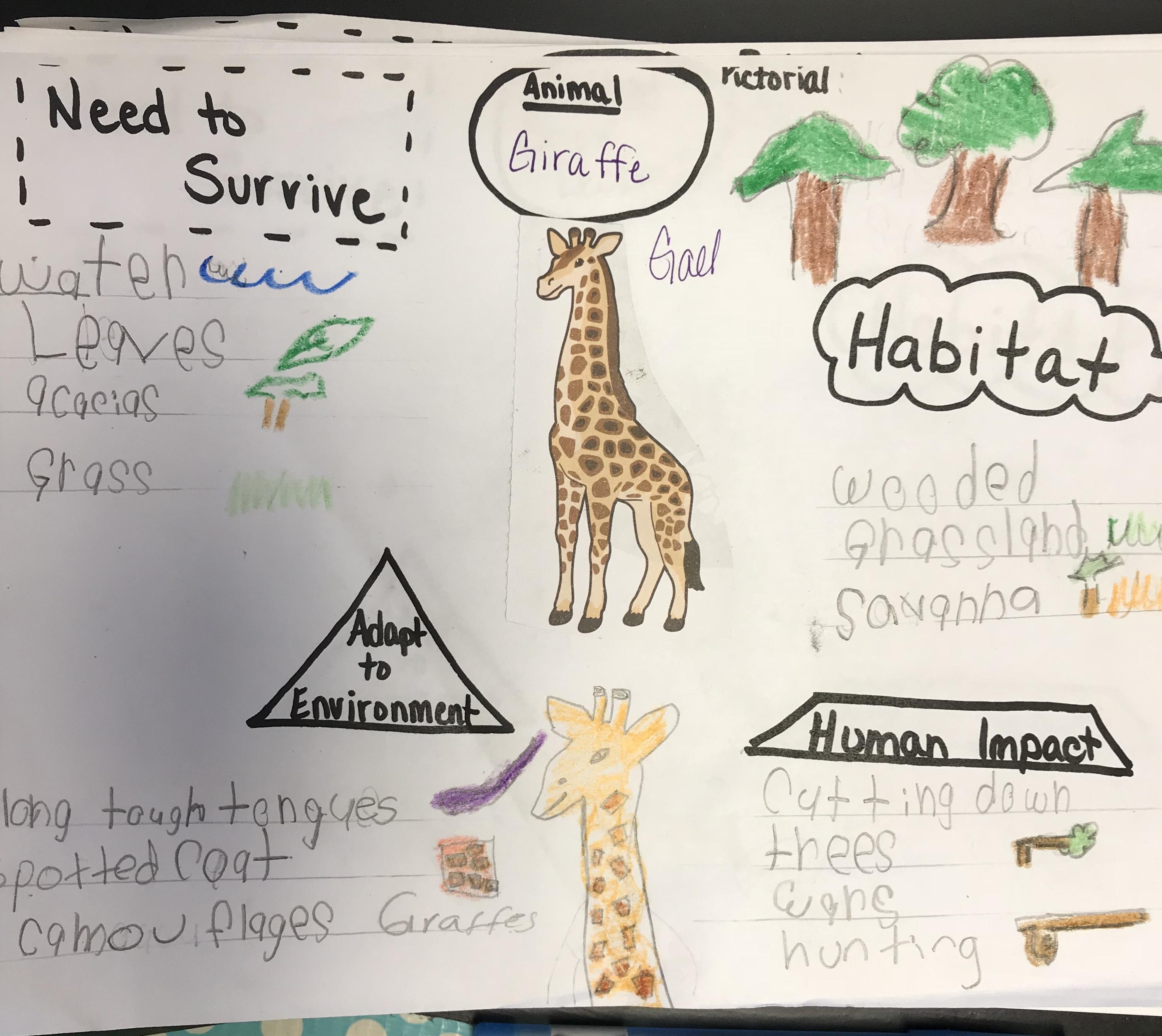 giraffe-pictorial.jpg#asset:7642