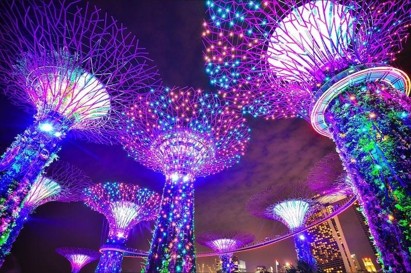 Tree-lights-og-400x800.jpg#asset:7554